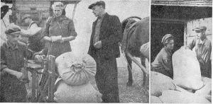 """Fotod ajakirjast """"Pilt ja Sõna"""" (number, aasta?). Laohoidja Langemets kaalub kolhoosi esimehe J. Kadariku ja ja Rakvere masina-traktorijaama kontrolli juuresolekul vilja üle. (vasakpoolne pilt) ja annab kaalutud kotid kolhoosnik I. Sehhanini abiga aita (parempoolsel fotol)."""
