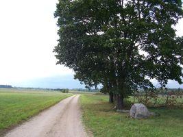 Tee kivi ees. Foto: Heiki Koov, august 2007.