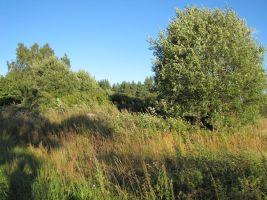 Vanad talukohad on võsasse kasvanud. Foto: Heiki Koov, august 2010.