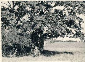 Tuudur Vettik Unikülas oma sünnimaja kohal, RM F 1337:96, SA Virumaa Muuseumid, http://www.muis.ee/museaalview/1372427.