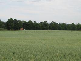 Foto: Heiki Koov, juuli 2010.